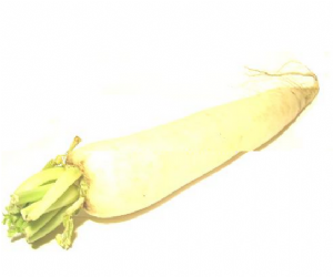 Fresh Mooli [Daikon / Mouli] | Buy Online at the Asian Cookshop